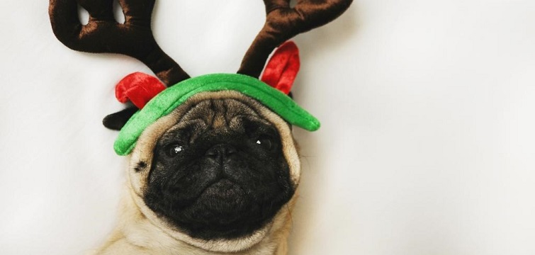 funny social media dog christmas hat