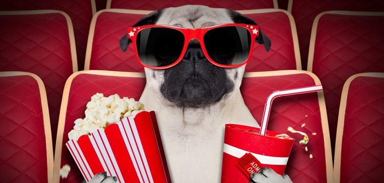 funny social media dog cinema movie popcorn