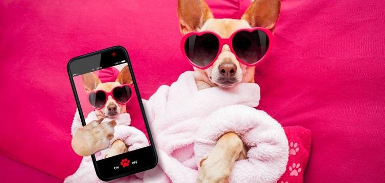 funny social media dog glamorous selfie mobile phone