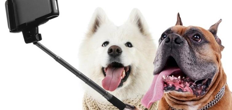 funny social media dog selfie smart phone mobile