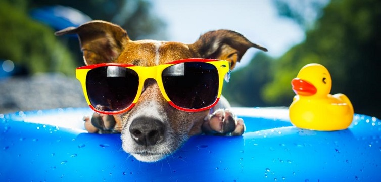 funny social media dog summer sunglasses swimming pool